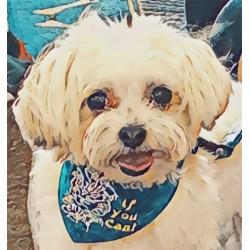 Petite Bandanaz with Dog Talk