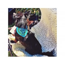 Tiny Bandanaz with Dog Talk